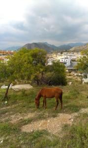 Horse in Nerja