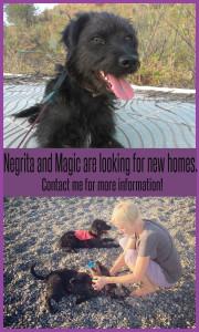 Adopt dog Spain