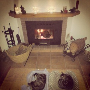Cats by fireplace