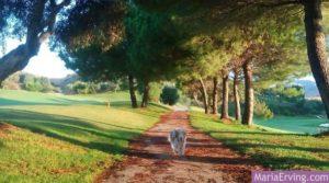 Santa Clara golf course, Marbella