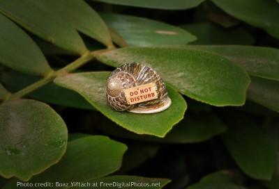 do not disturb snail image